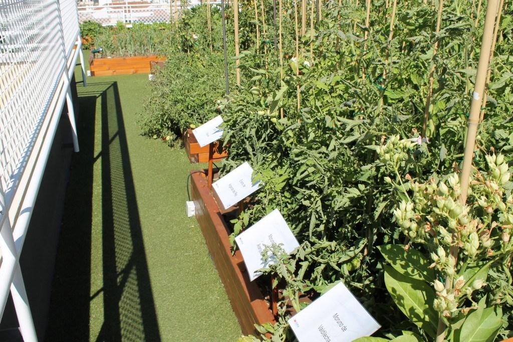 Tomates autóctonos de la C.Madrid