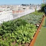 12 Consejos sobre Cuidados de Hortalizas en Huertos de Exterior