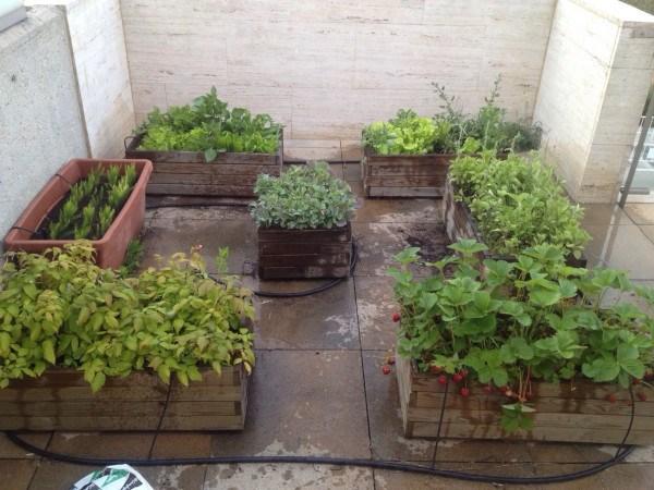 cmo cultivar un huerto urbano en terraza - Huertos En Terrazas