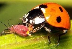 criar insectos beneficiosos