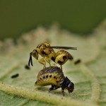 Enemigos Naturales en el Huerto Ecológico