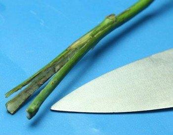 Corte longitudinal del tallo en 3 partes.