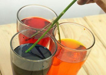 Colocación del tallo en los vasos con colorante.