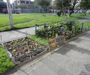 Los vecinos de Mafe se han animado a crear sus propias huertas.