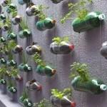 Solicitud para hacer un huerto urbano en Madrid