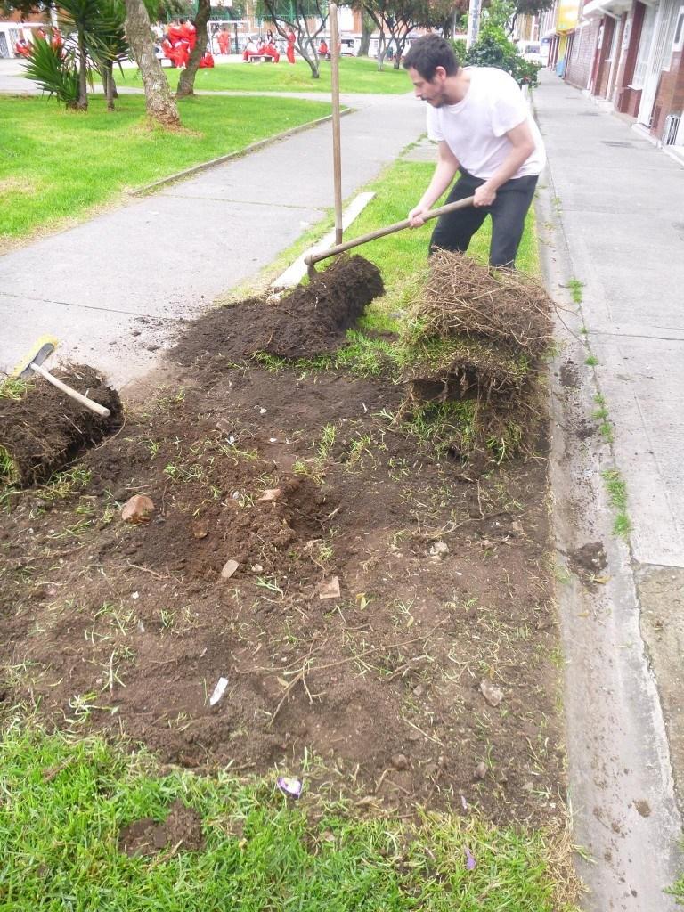 Aquí vemos cómo levantan el césped del parque para comenzar con el huerto urbano