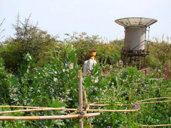 Huerta de la Ecoaldea Velatropa
