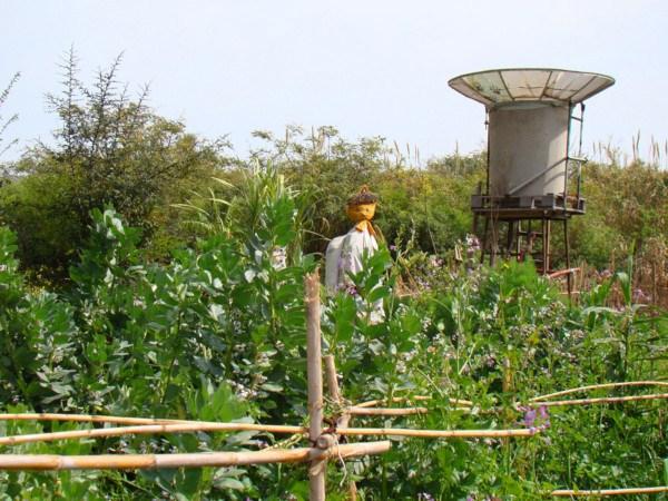 Huerta de la Ecoaldea Velatropa (Fuente: www.yorokubu.es)