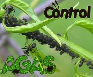 Consejos para Eliminar Plagas en el Huerto