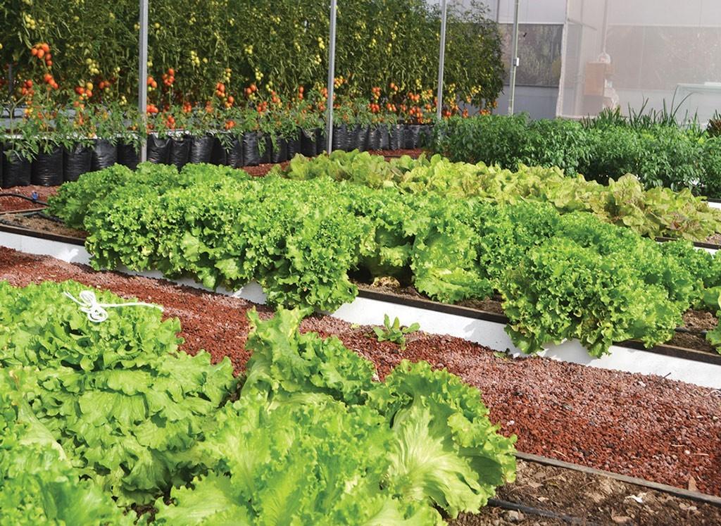 Huertos urbanos en m xico df for Casa y jardin mexico