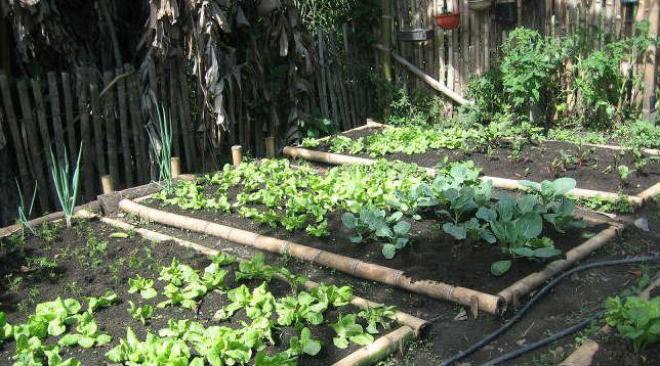 "Centro de promoción de ala agricultura urbana y ecológica ""Al Natural"" (Fuente: www.timeoutmexico.mx)"