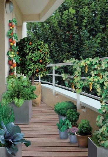 Un huerto en el balc n c mo crearlo y cultivarlo - Faire un jardin sur son balcon ...