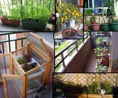 elegir los recipientes de cultivo para planificar el huerto