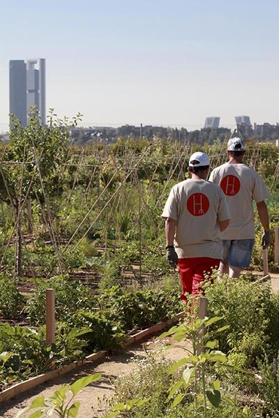 Trabajadores en la Huerta de Montecarmelo de la Fundación Carmen Pardo - Valcarce (Fuente: www.lahuertademontecarmelo.com)