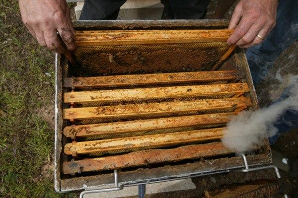 Aquí observamos el interior de una colmena. Fuente: www.thehoneygatherers.com