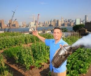 Aquí vemos una colmena situada al fondo de un huerto urbano en Brooklyn. Fuente: www.thehoneygatherers.com
