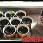 Semilleros Caseros para principiantes. Hacer semilleros paso a paso