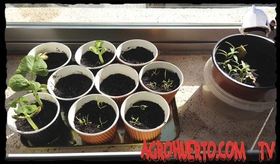 Semilleros para plantar pimientos y otras plantas del huerto