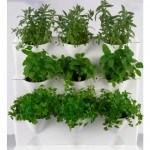 Plantas fáciles de cultivar. 7 plantas del huerto para principiantes