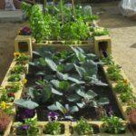 Cómo hacer una huerta paso a paso y cultivar tus propios alimentos
