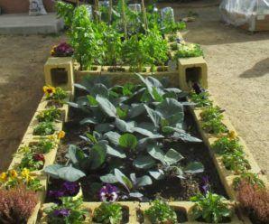 cómo cultivar una huerta