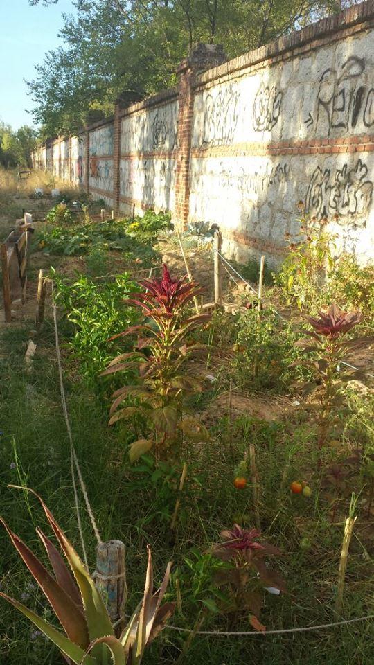 """Cultivos en el huerto """"El tablao de la compostura"""" de Las Tablas (Fuente: www.facebook.com)"""