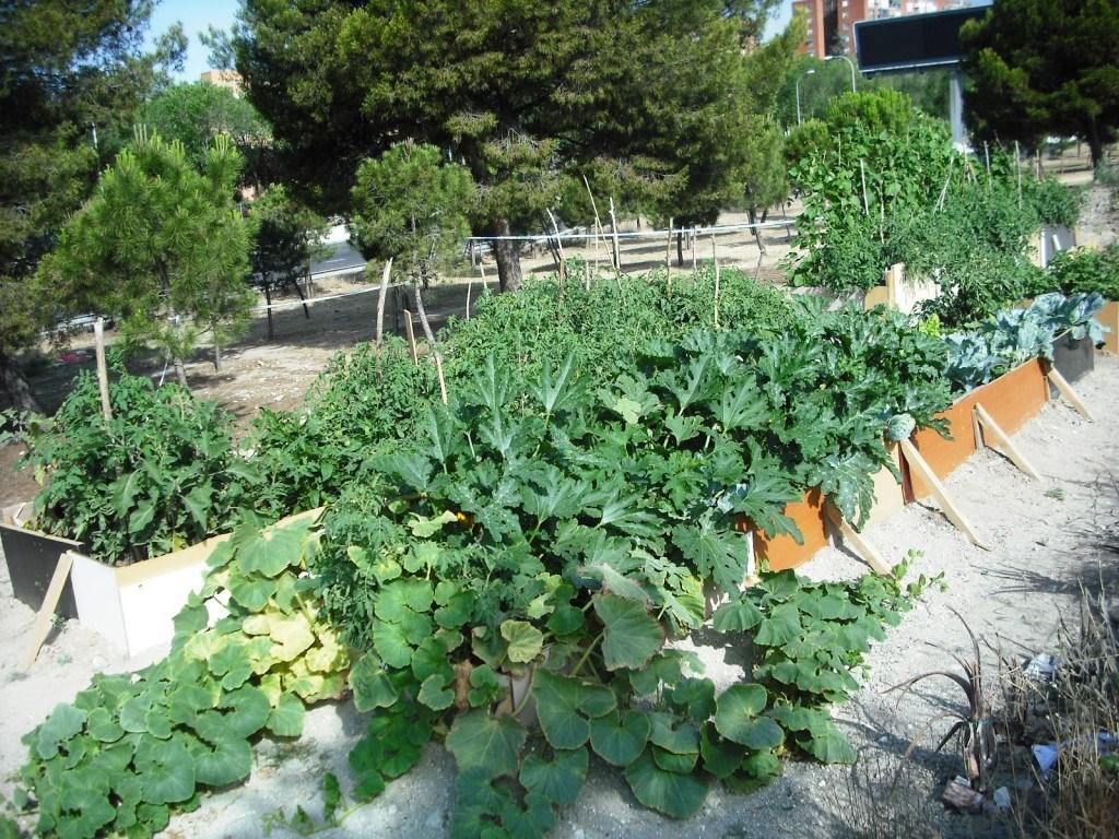 Bancales de cultivo en el huerto Santa Eugenia de Villa de Vallecas (Fuente: www.huertosantaeugenia.blogspot.com)