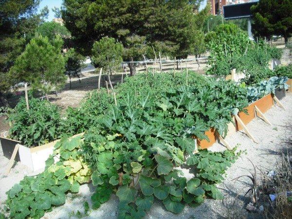 Bancales de cultivo en el huerto Santa Eugenia de Villa de Vallecas