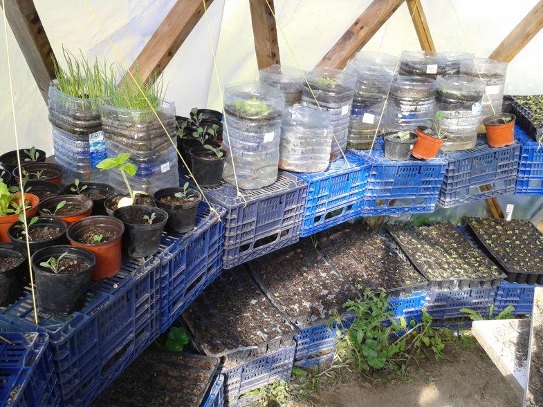 """Plantel ecológico en """"El Bancal"""" (Fuente: www.elbancal.wordpress.com)"""