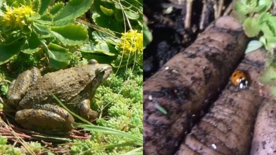 Aquí vemos un ejemplo de las especies que ya se han encontrado sobre la cubierta del Phytokinetic.