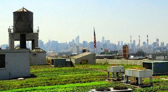 """""""Brookling Grange"""" en Nueva York, es el huerto urbano en azotea más grande del mundo y un claro ejemplo de que la Naturación urbana es posible. (Fuente: www.lateoriadeldan.blogspot.com.es)"""