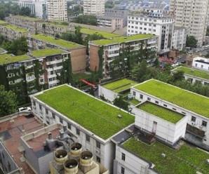 Cubiertas vegetales. Fuente: zinco-cubiertas-ecologicas.es