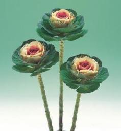 Aspecto de las coles ornamentales espigadas en forma de flor. Fuente: www.coproa.com