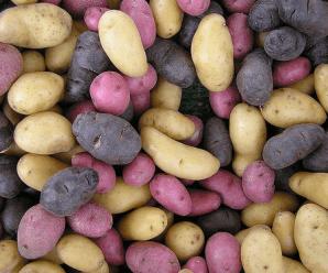 Hay muchísimas variedades de patatas. Fuente: oloravioletas.wordpress.com