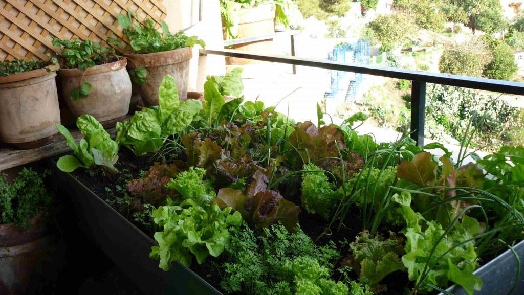Aquí vemos una mesa de cultivo repleta de lechugas, zanahorias y cebollas. Fuente: www.tuandco.com