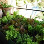 Plantas de invierno. Qué verduras y hortalizas cultivar en otoño e invierno