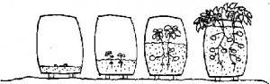 Aquí vemos cómo se debe realizar correctamente el cultivo en bolsas. Fuente: lahuertinadetoni.es