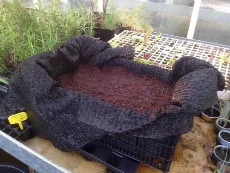 Cultivar Zanahorias en Cajas