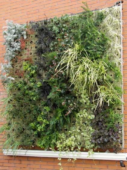 Pared verde instalada en la escuela de Agrónomos.