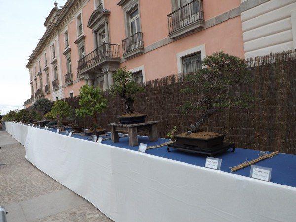 Aquí tenéis la exposición de bonsáis...¡Eran preciosos!