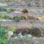 Bancales permanentes. Cultivo y creación
