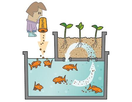 El ciclo acuapónico es así de fácil (www.hydrogarden-hidroponia.com)