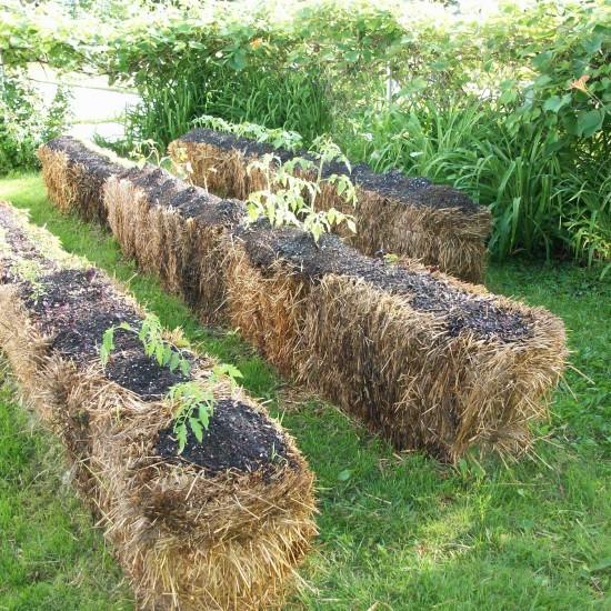 Podemos utilizar la paja tanto para hacer un acolchado como para cultivar sobre ella. Fuente: http://rochester.radishmagazine.com/