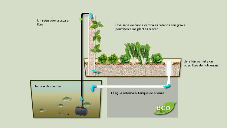 Acuapon a o cultivo con peces qu es c mo funciona y for Design your own farm layout