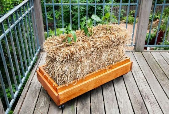 También podemos cultivar sobre balas de paja en nuestro balcón. Fuente: http://bonnieplants.com