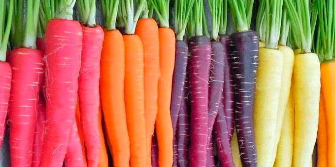 Las zanahorias originalmente no eran naranjas. Fuente: www.especia-l.es