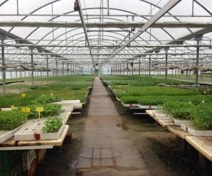 Interior de un vivero o semillero.