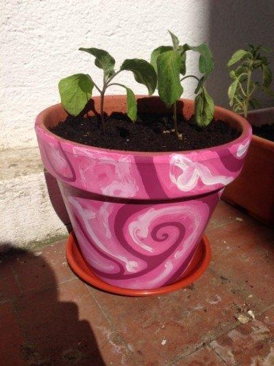 Maceta rosa con berenjenas. Gracias a AitorJass.