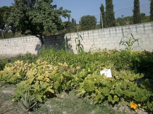 Cultivos en el huerto del IES Barajas (Fuente: www.huertoiesbarajas.wordpress.com)
