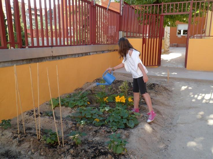 Una alumna del CEIP Maniano José de Larra riega los cultivos del huerto escolar (Fuente: www.ceipmarianojosedelarra.blogspot.com.es)